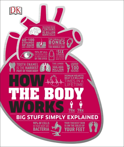 How the Body Works: Big Stuff Simply Explained